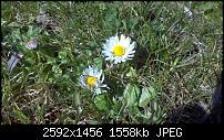 Ausführlicher Testbericht Motorola Atrix-2011-03-23_10-39-16_75.jpg
