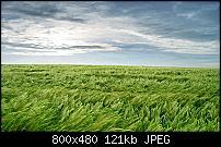 Motorola Milestone Wallpaper / Hintergrundbilder-n900-800x480-wallpapers-04.jpg