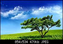 Motorola Milestone Wallpaper / Hintergrundbilder-7771.jpg