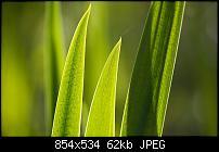 Motorola Milestone Wallpaper / Hintergrundbilder-backgrounds02-sunlit-reeds.jpg