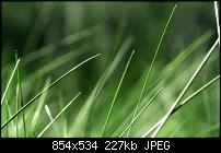 Motorola Milestone Wallpaper / Hintergrundbilder-in_the_grass_by_vathanx.jpg