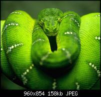 Motorola Milestone Wallpaper / Hintergrundbilder-tree-snake-branch.jpg