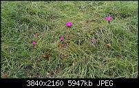 Nokia 8 – Qualität der Fotos-img_20170915_151046.jpg