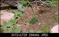 Nokia Lumia 1020 - Fotoqualität-wp_20130922_14_27_10_pro.jpg