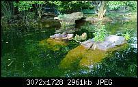 Nokia Lumia 1020 - Fotoqualität-wp_20130922_17_12_56_pro.jpg