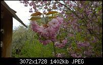 Nokia Lumia 1020 - Fotoqualität-wp_20160423_11_48_21_pro.jpg