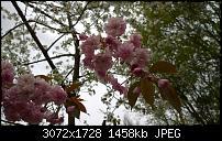 Nokia Lumia 1020 - Fotoqualität-wp_20160423_12_13_54_pro.jpg