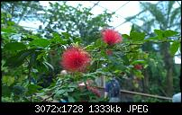 Nokia Lumia 1020 - Fotoqualität-wp_20160423_15_30_49_pro.jpg
