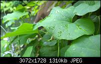 Nokia Lumia 1020 - Fotoqualität-wp_20160423_15_37_07_pro.jpg