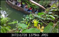 Nokia Lumia 1020 - Fotoqualität-wp_20160423_15_37_20_pro.jpg