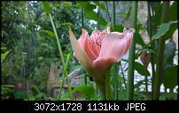 Nokia Lumia 1020 - Fotoqualität-wp_20160423_16_16_45_pro.jpg