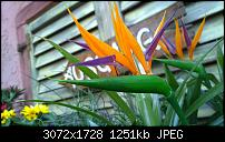 Nokia Lumia 1020 - Fotoqualität-wp_20160423_16_51_26_pro.jpg