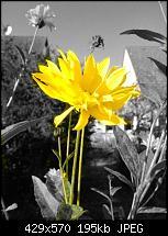 Nokia Lumia 720 - Kamera und Bildqualität-wp_20131024_14_47_49_pro20131024150413.jpg