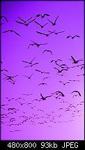 Lockscreenbilder vom Lumia-wallpaper_04.jpg