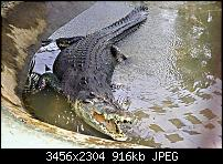 Foto des Tages-croc.jpg