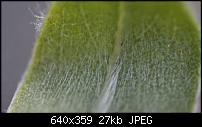 Einsteiger DSLR?-uploadfromtaptalk1345234648126.jpg
