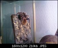 Qtek S200 Kamera start probleme-image_00004.jpg