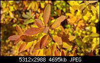 Fotoqualität des Samsung Galaxy Note 4-2014-11-23-14.01.28.jpg