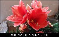 Fotoqualität des Samsung Galaxy Note 4-20141227_100352.jpg