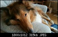Fotoqualität des Samsung Galaxy Note 4-uploadfromtaptalk1422822817506.jpg