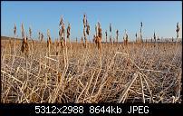 Fotoqualität des Samsung Galaxy Note 4-20150227_080515-1.jpg