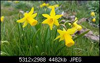 Fotoqualität des Samsung Galaxy Note 4-uploadfromtaptalk1427270995831.jpg