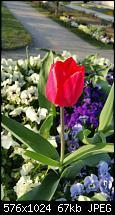 Fotoqualität des Samsung Galaxy Note 4-1459792176662.jpg