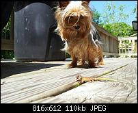 Kamera BQ verbessern-uploadfromtaptalk1338069133303.jpg