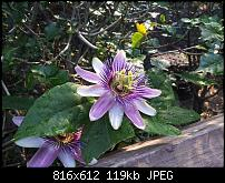 Kamera BQ verbessern-uploadfromtaptalk1338235741561.jpg