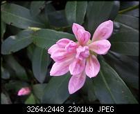 Kamera BQ verbessern-20120428_152302.jpg