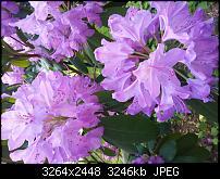 Kamera BQ verbessern-20120525_151334.jpg
