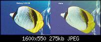 -sgs2_vs_atrix_2.jpg