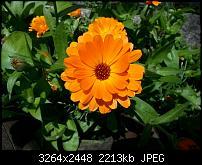 Kamera (Video- und Fotoqualität) vom Galaxy S III-20120617_115707.jpg
