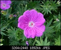 Kamera (Video- und Fotoqualität) vom Galaxy S III-20120617_175049.jpg