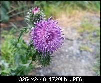Kamera (Video- und Fotoqualität) vom Galaxy S III-20120619_190824.jpg