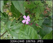 Kamera (Video- und Fotoqualität) vom Galaxy S III-20120619_181748.jpg