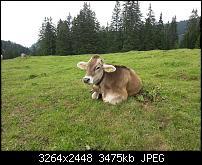 Kamera (Video- und Fotoqualität) vom Galaxy S III-dsc_0013.jpg