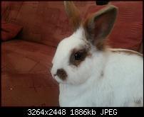Kamera (Video- und Fotoqualität) vom Galaxy S III-20120628_154459.jpg