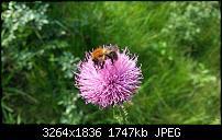 Kamera (Video- und Fotoqualität) vom Galaxy S III-20120629_182708.jpg