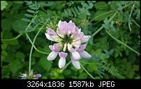 Kamera (Video- und Fotoqualität) vom Galaxy S III-20120629_183212.jpg