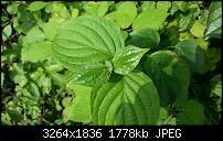 Kamera (Video- und Fotoqualität) vom Galaxy S III-20120629_171157.jpg