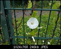 Kamera (Video- und Fotoqualität) vom Galaxy S III-imageuploadedbytapatalk1341258937.560737.jpg