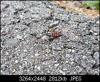 Kamera (Video- und Fotoqualität) vom Galaxy S III-20120703_154924.jpg