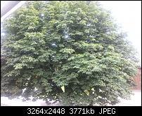 Kamera (Video- und Fotoqualität) vom Galaxy S III-20120704_151034.jpg