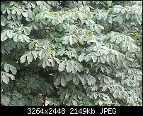 Kamera (Video- und Fotoqualität) vom Galaxy S III-20120705_160516.jpg