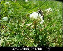 Kamera (Video- und Fotoqualität) vom Galaxy S III-2012-07-26-14.17.54.jpg