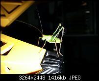 Kamera (Video- und Fotoqualität) vom Galaxy S III-20120729_104155.jpg