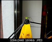 Kamera (Video- und Fotoqualität) vom Galaxy S III-20120729_105554.jpg