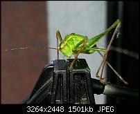 Kamera (Video- und Fotoqualität) vom Galaxy S III-20120729_105817.jpg