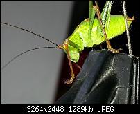 Kamera (Video- und Fotoqualität) vom Galaxy S III-20120729_110248.jpg